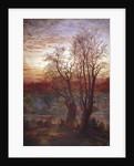 Burnham Beeches by Andrew MacCallum