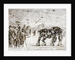 Meeting of the Shire Horse Society in Islington's Agricultural Hall, London by Frank Watkins