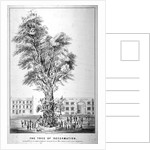 The Tree of Reformation by Anonymous