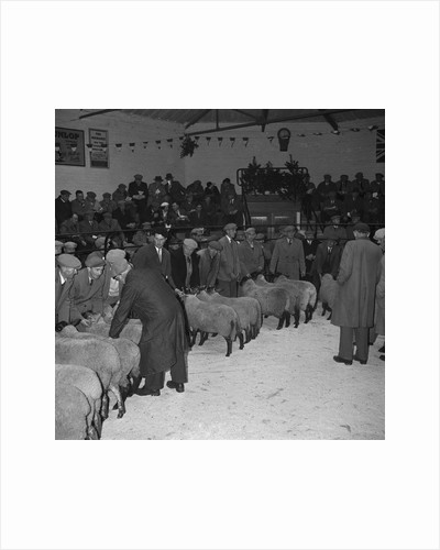 Ballasalla Christmas Stock Show by Manx Press Pictures