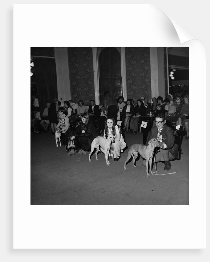 Dog Show, Villiers hotel by Manx Press Pictures