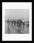 Circus elephants on Douglas Promenade by Manx Press Pictures