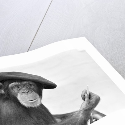 Artist Chimp by Williams