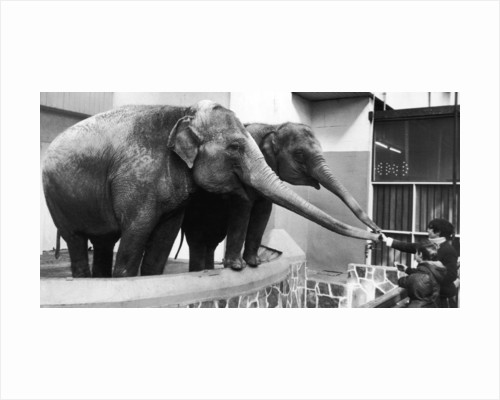 Children feeding the elephants by Staff