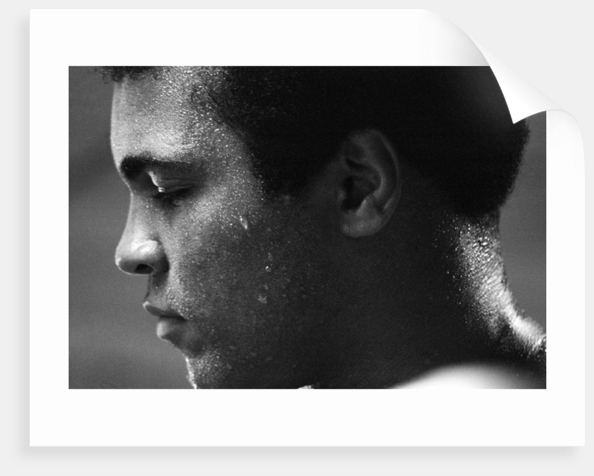 Muhammad Ali by Anonymous
