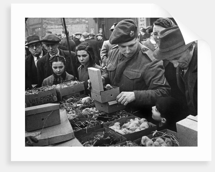 East London Small holders restocking sale. 18th February 1945 by MacLellan
