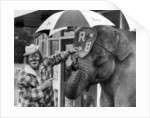 Jack Fossett and Maureen the elephant by Staff