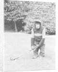 A Chimpanzee playing a round of golf. by Staff