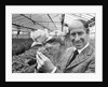 Bobby Charlton holding a rose in a greenhouse by Anonymous