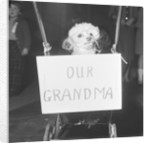 Grandma the dog by Maurice Tibbles