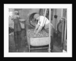 Carrot Powder making at Bristol by Staff