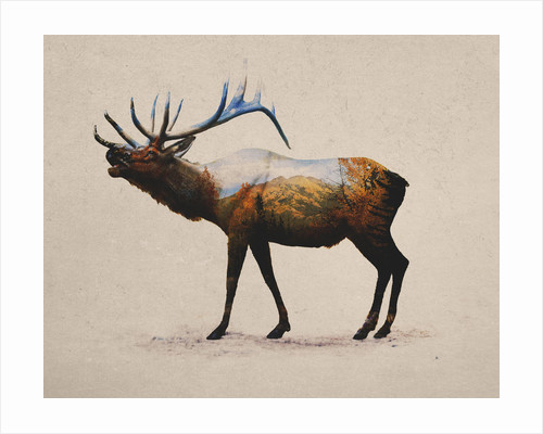 Rocky Mountain Elk by Davies Babies