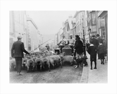 A car surrounded by sheep by Anonymous