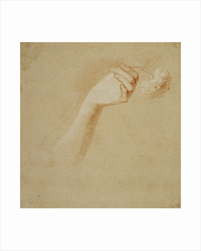 A Lady's Left Hand, Holding a Rose. Study for the Painting 'The Artist's Wife: Margaret Lindsay of Evelick' by Allan Ramsay