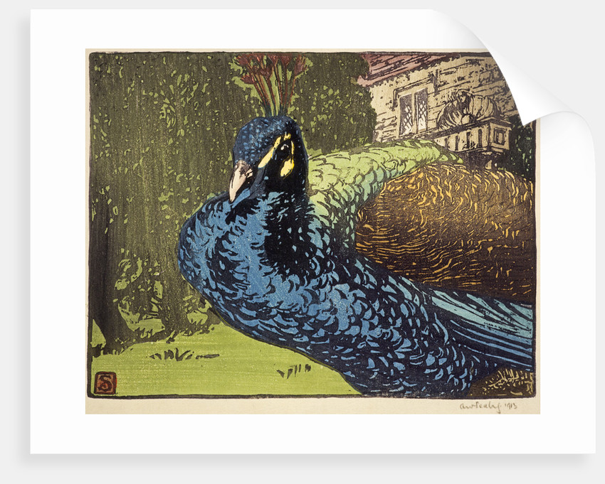 Peacock by Allen William Seaby