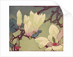 Magnolia by Mabel Royds
