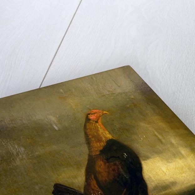 Fighting Cock in a Landscape by Henry Thomas Alken