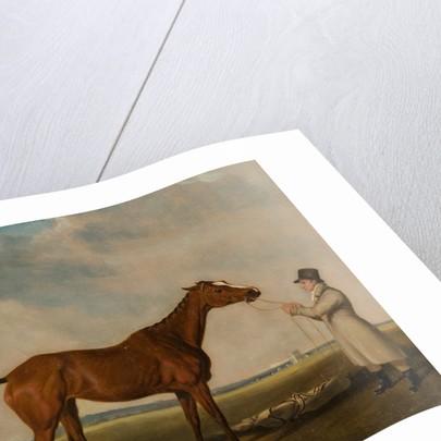 Rhoda', A Bay Racehorse by William Tasker