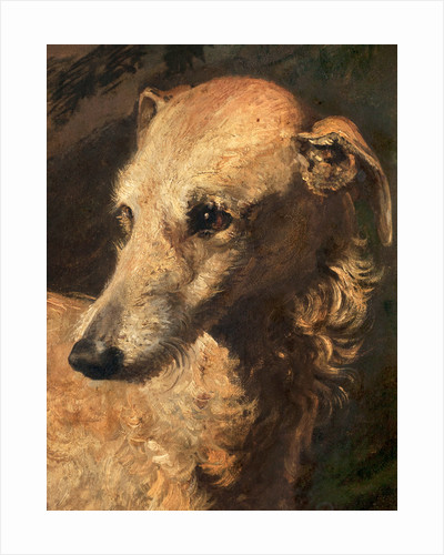 Head of Driver, a Deerhound Owned by the 5th Duke of Gordon by Edwin Henry Landseer