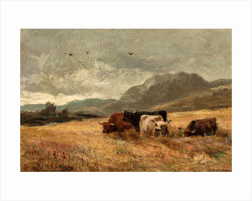 Highland Cattle in cornfield by John Smart