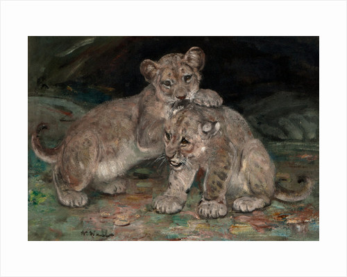 Lion Cubs c.1906 by William Walls