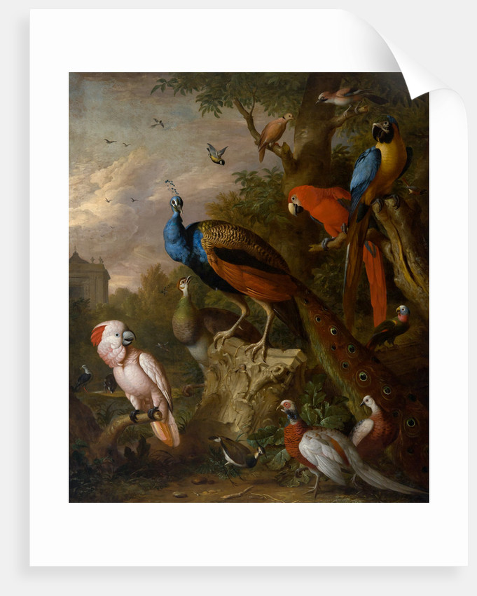 Peacocks and other exotic birds by Jacob Bogdany