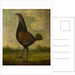 Fighting Cock by John Nost Sartorius