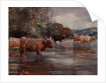Highland Cattle in a landscape by Andrew Douglas