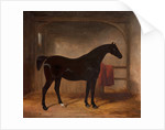 Black horse in a loose box, 1836 by William Henry Barraud
