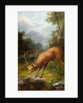 The Stag Looking into the Water by John Bucknell Russell