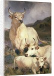 Wild Cattle of Chillingham by Sir Edwin Henry Landseer