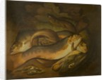 Fishes by Moses Haughton