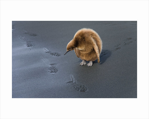 Footprints by Robert Friel