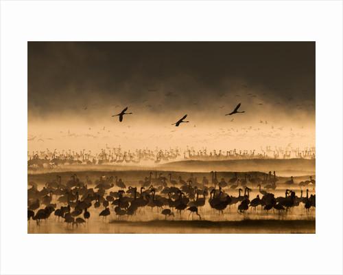 Taking flight by Paul Goldstein