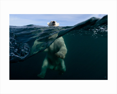 Polar power by Joseph Bunni