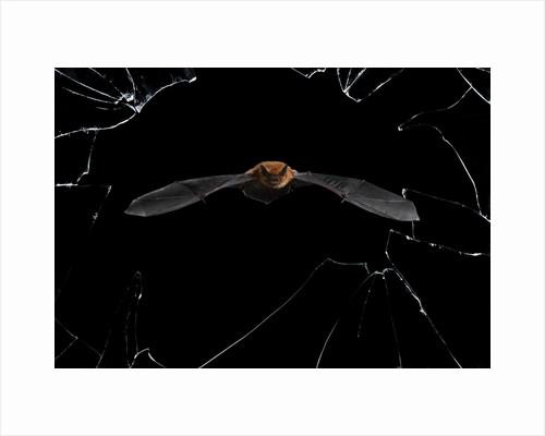 Crystal Precision by Mario Cea