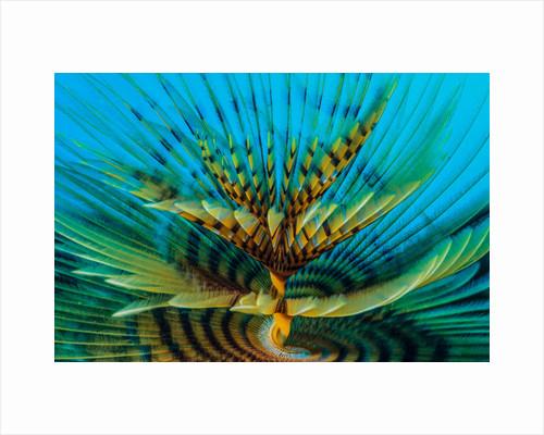 Spiral by Marco Gargiulo