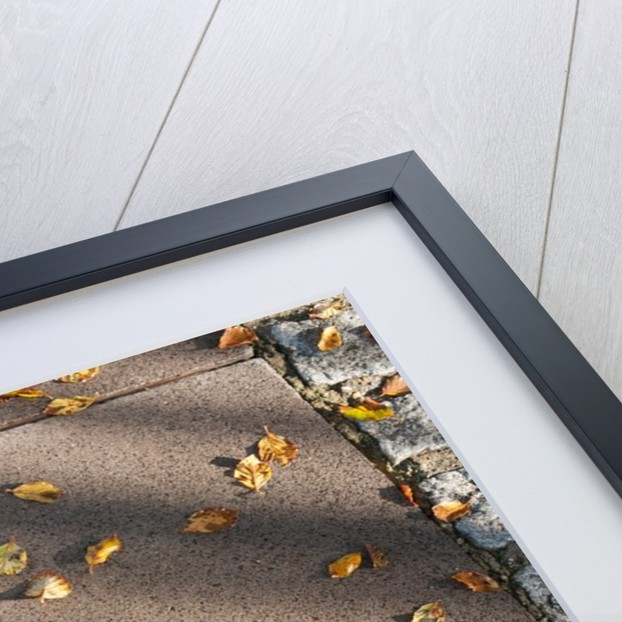 Autumn leaves on the Prime Meridian, Royal Observatory, Greenwich, London by National Maritime Museum