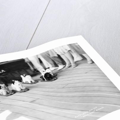 Dog racing aboard the 'Rawalpindi' by Marine Photo Service