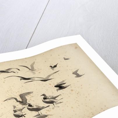 Seabirds standing in water and in flight by William Lionel Wyllie