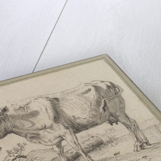 Study of a cow, after Paul Potter by Edward William Cooke