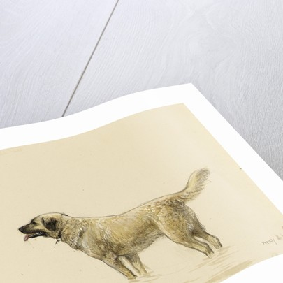 'Mendip' Megs St Bernard dog by John Brett