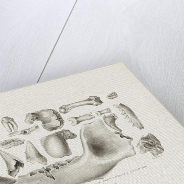 Teeth & bones found in Kent's Hole, near Torquay, Devon, 1824 by M. Morland