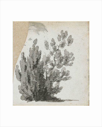 A study of a shrub by Thomas Baxter