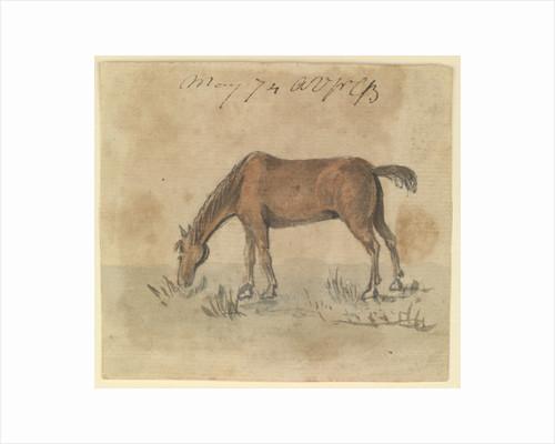 A grazing horse by Gabriel Bray