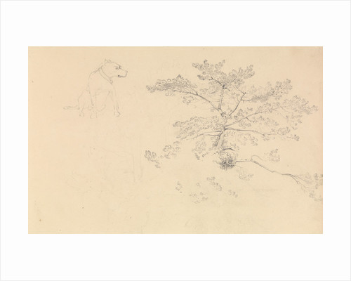 Study of a dog wearing collar and of tree branches by John Christian Schetky