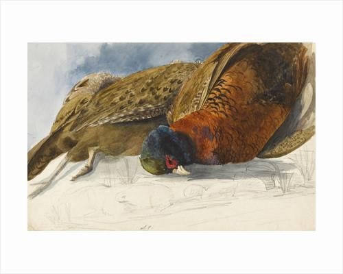 Study of a brace of pheasants by Matilda Rose Herschel