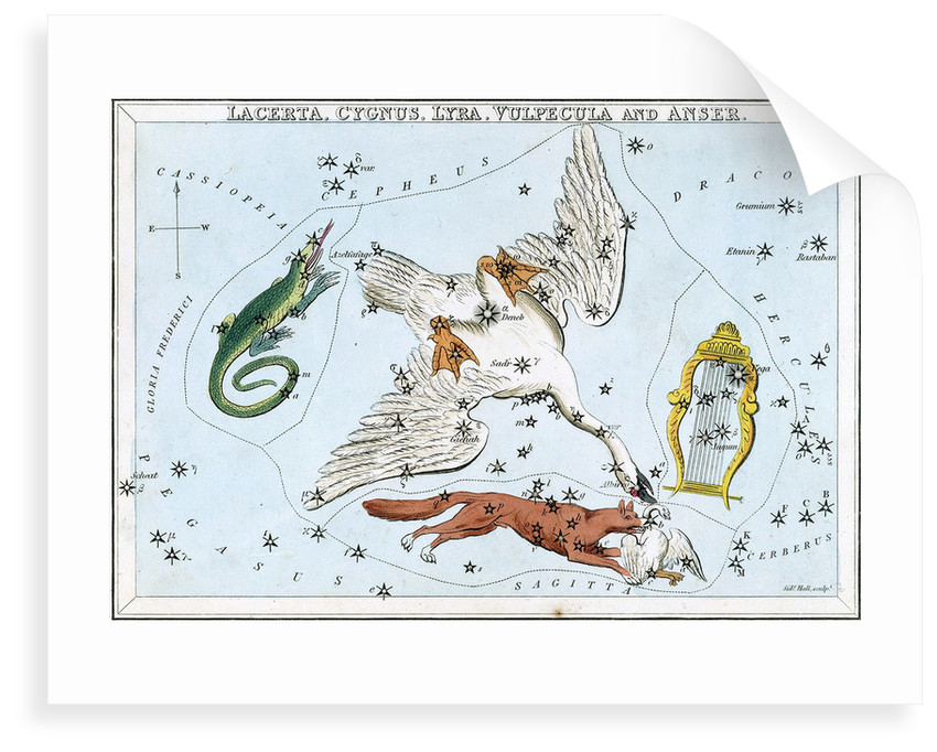 Constellation card, Urania's mirror, lacerta, cygnus, lyra, vulpecula and anser by Sidney Hall