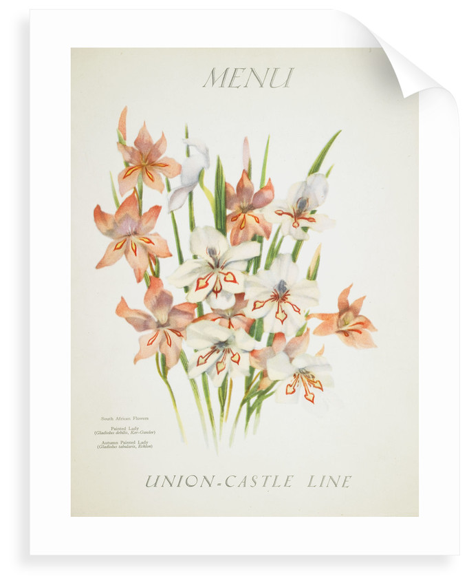 Front cover of Union Castle Line menu from RMS 'Pretoria', depicting South African flowers by unknown