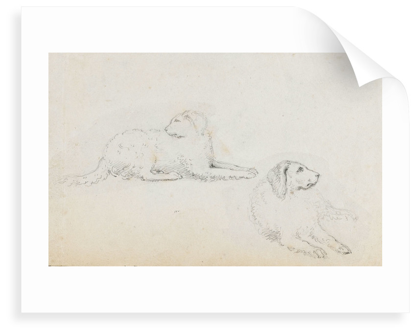 Studies of Nelson's dogs (recto) by Thomas Baxter